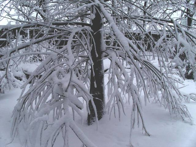 tree in snow2